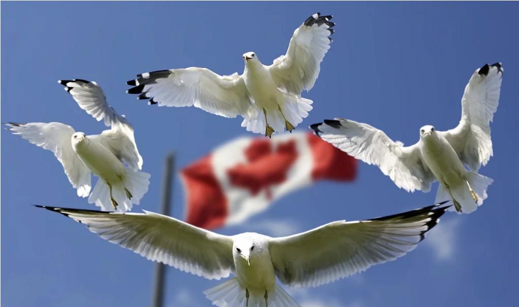 380萬加拿大人選擇搬家,BC省憑啥能成為他們的首選?