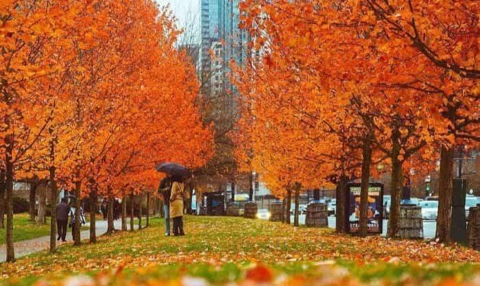 """加拿大的代表作是枫叶,而现在又是最佳的红枫季。大温赏枫地点虽然多,但最著名、最有枫情的地点,大概在十个以内。到了枫叶季,这些地点都会吸引无数游人前来驻足、打卡、拍美照。那么,你是否想过这个问题:尽管枫叶季短暂,但既然这些地点的枫叶这么美……如果长期生活在这些社区,是不是个好主意?大温枫叶最好看的这些社区,在大温各社区的""""宜居指数""""榜单上,能排到怎样的名次?这些""""红枫社区"""",对华人来说,居住的优点和缺点分别是什么?挑选最具代表的几个,来分析一下。Ontario街夹W11Ave所属社区:M..."""