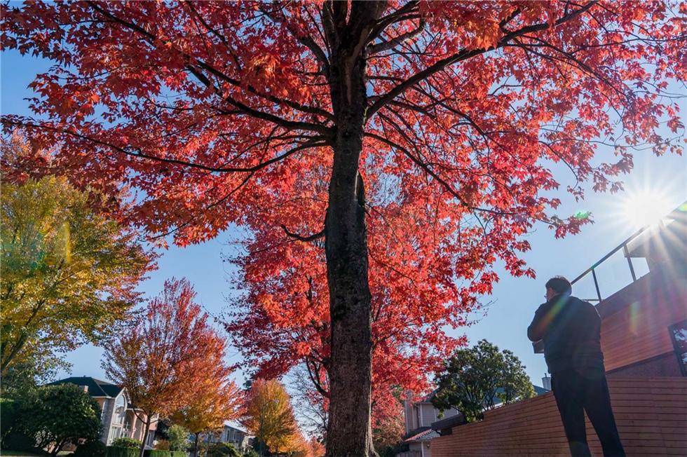 我能想到最浪漫的事,是带你来看温哥华的秋天……