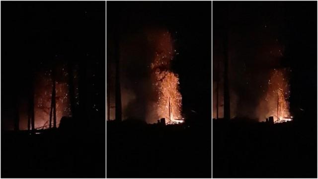 加拿大树比人值钱?高贵林居民连砍带烧500棵树,政府表示:管不了